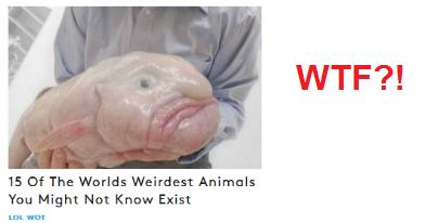 Imagen de un pescado muy grande y un tanto deforme.